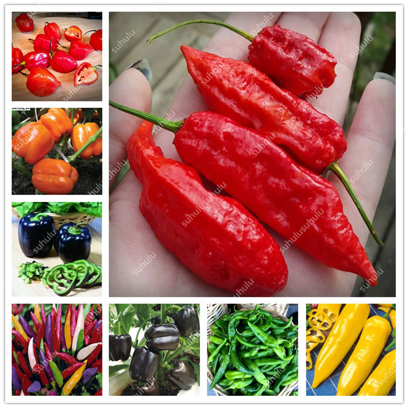 1000 Pcs Sweet Pepper Bonsai Colorful Mix High Quality Sweet Bell Pepper Bonsai Vegetables Paprika Home Garden Bonsai Plants