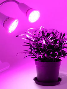 Lamp Led-Plant Grow E27 Base Growing-Lamp-Bulb Hydroponic-Growth-Lights Two-Head-Clip