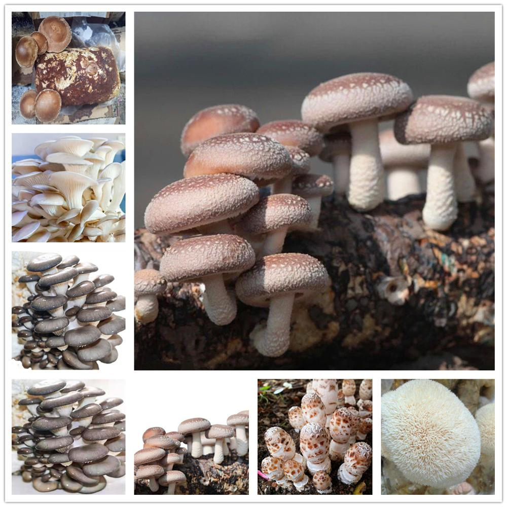 Plant   Bath Salts Mushroom Vegetables Essence 100Pcs XZZ-190