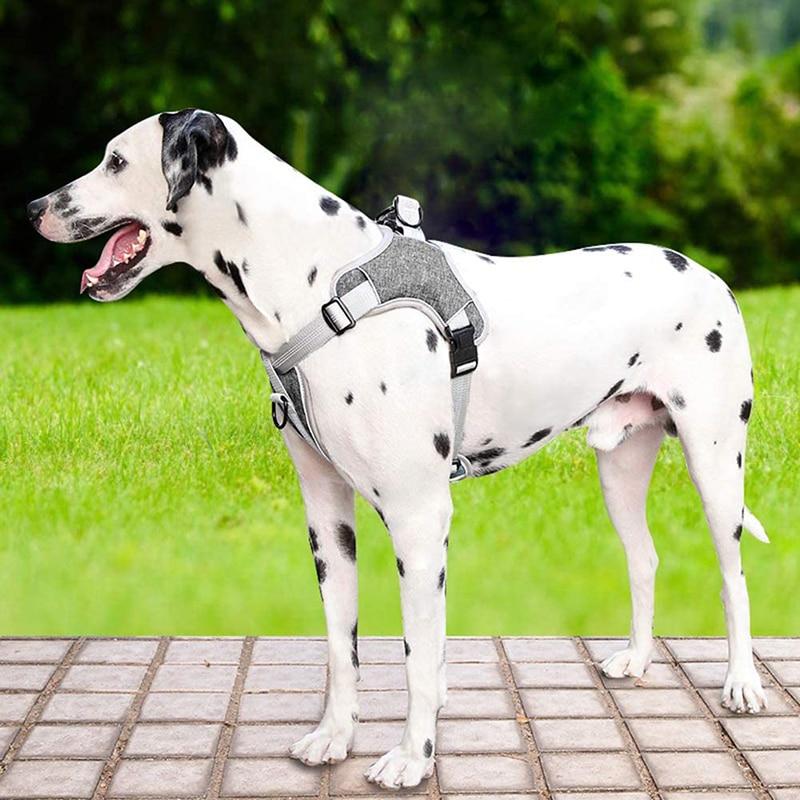 Hundegesetze
