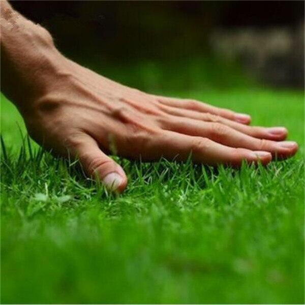 300-Pcs-Japanese-Forest-Grass-lawn-Perennial-Evergreen-Lawn-bonsai-plant-Beautiful-Garden-Ornamental-Plant-Easy
