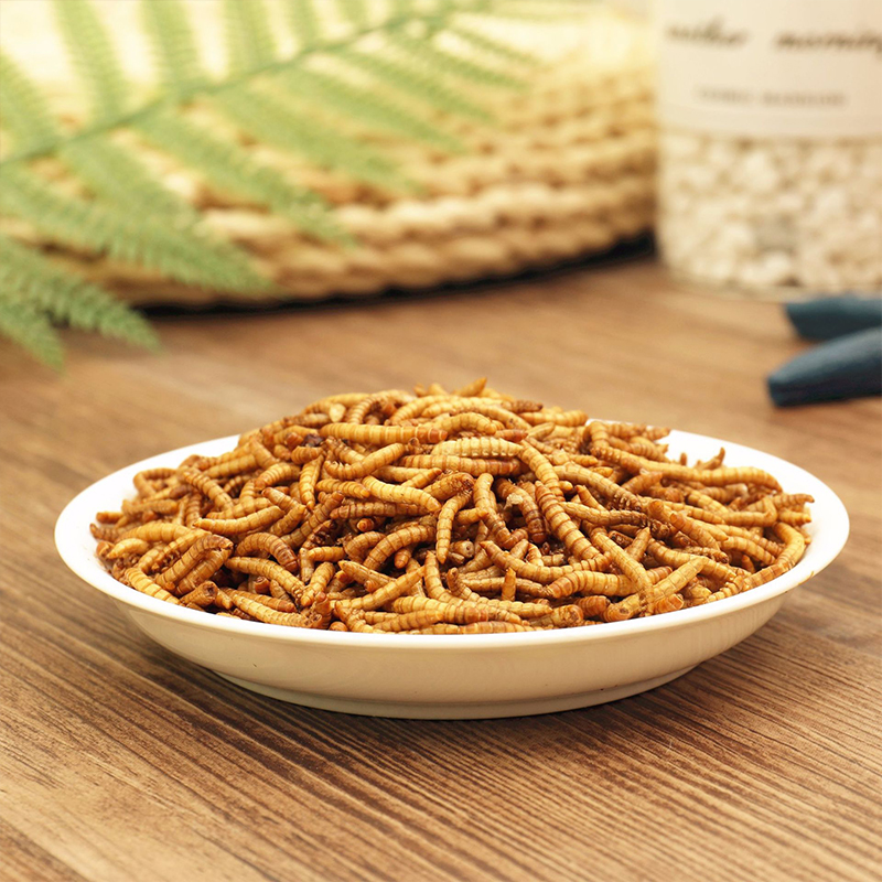 25g 50g Freeze dried Mealworm Ant Nest Ant Food Nutritious Protein Ant Farm Accessories font b