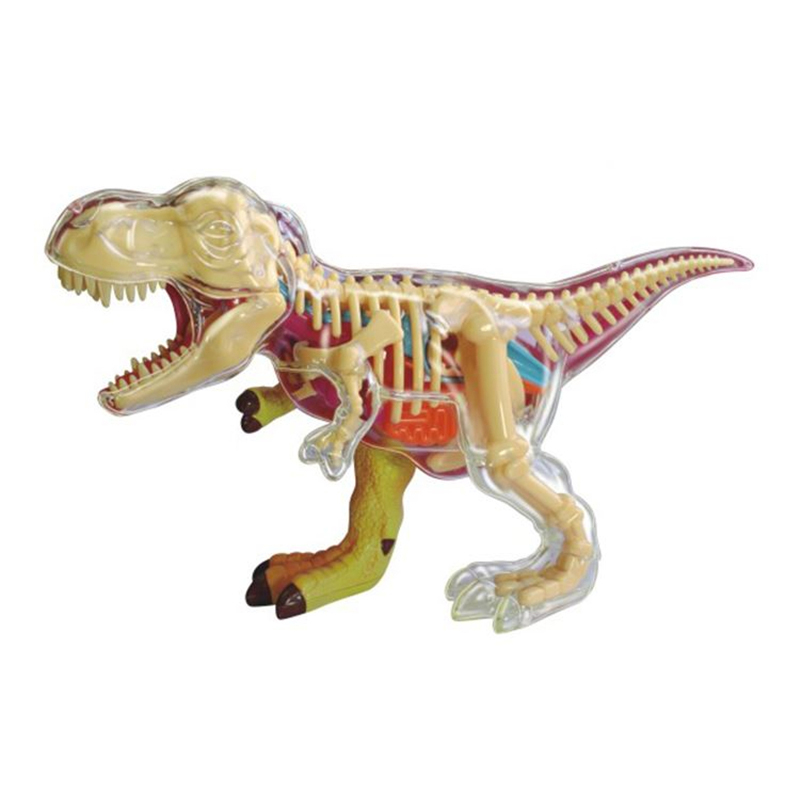 Authentic 4D Master Dinosaur Anatomy Assembly Model Q Edition Simulation Animal Educational Toy