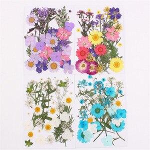 Натуральные сушеные цветы сочетание DIY прессованный цветок Гербария декоративные поделки наполнитель для изготовления ювелирных изделий ...