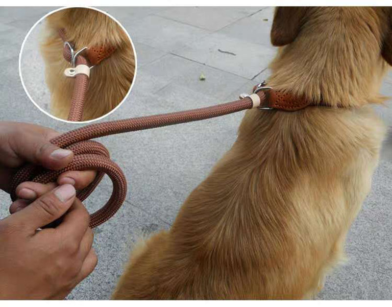 dog leash changjing 1
