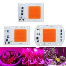 LED 성장 COB 빛 칩 전체 스펙트럼 AC 220V 10W 20W 30W 50W 성장을위한 필요 없음 꽃 묘목 성장 식물 조명