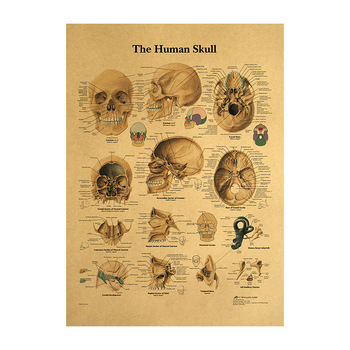 the human head bone Structural anatomy Vintage kraft paper poster Wall sticker print painting home decor 42x30cm image