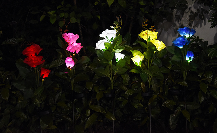 de luz da flor de rosa ao