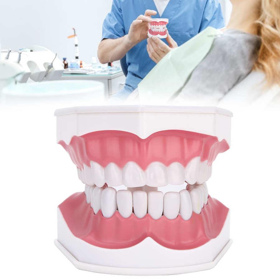 Dentes modelo 180 graus aberto capaz gengivas