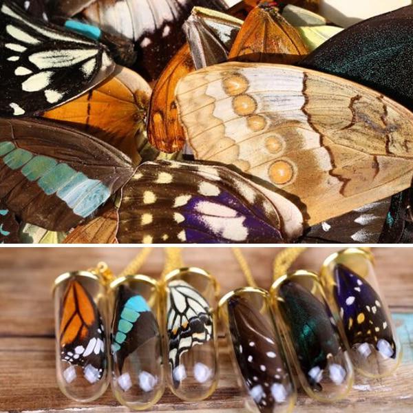20 шт. настоящие крылья бабочки 3D образцы бабочек крылья настоящие сушеные крылья бабочки для кольца/сережек/ожерелья