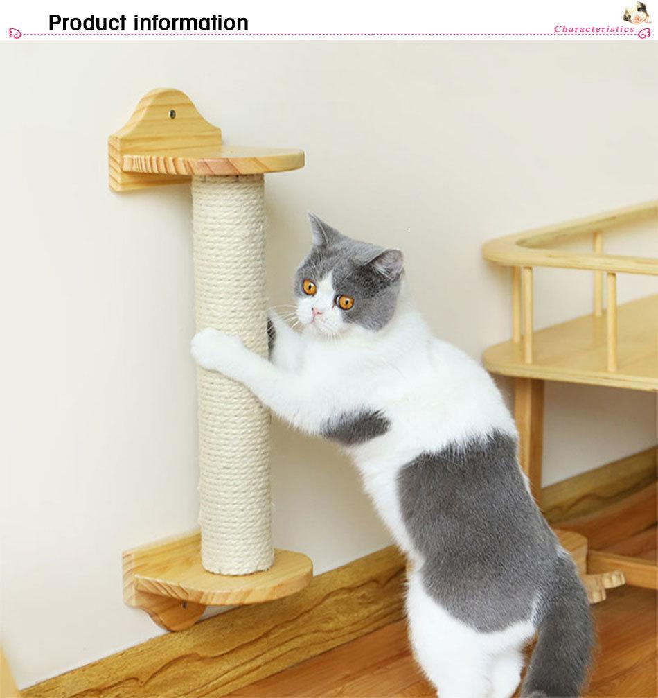 29++ Shorline humane cat condos info