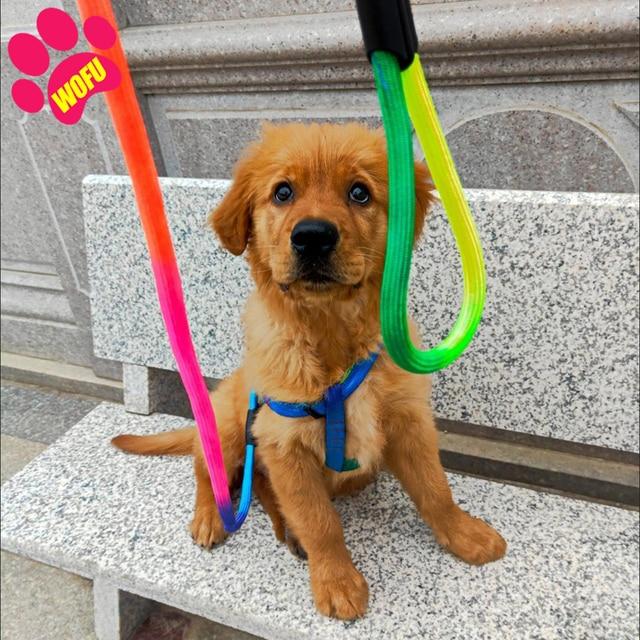 Rainbow Dog Leash & Harness - Luxury Cat Leash & Harness  4