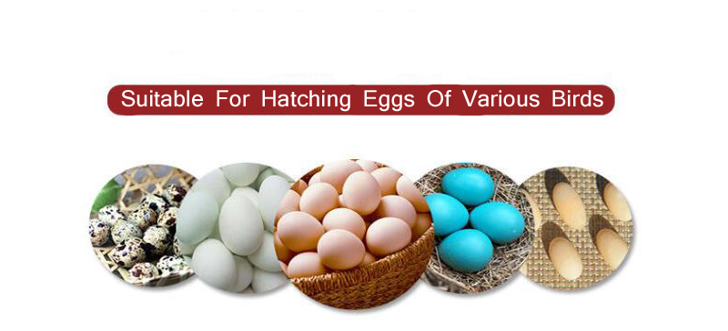 Newest Digital Egg Hatching Incubator With Temperature Alarm/Humidity Alarm For Birds 5