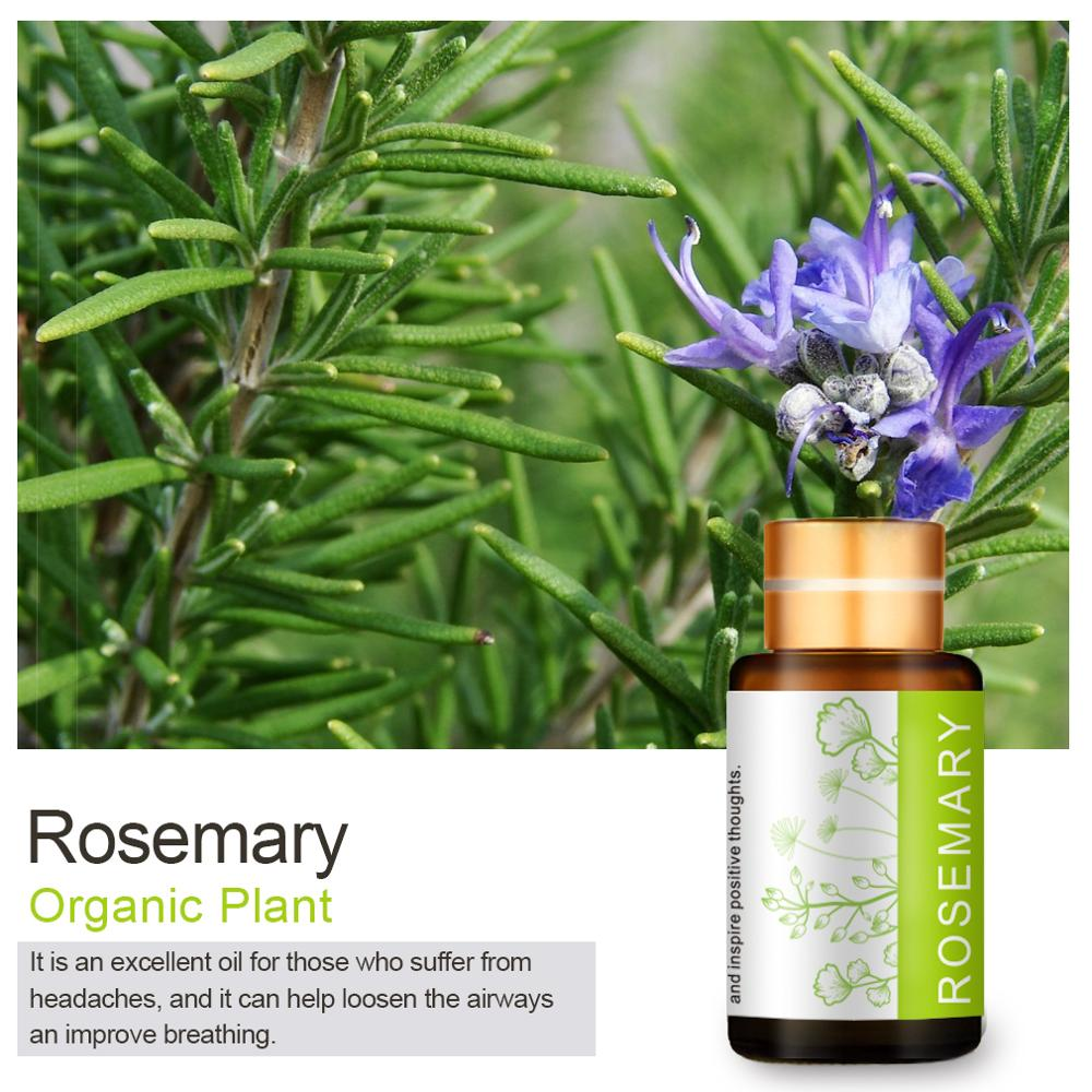 US $43.43 430% OFF43ML natural Rosemary essential oil Hair growth Refreshing  Firming skin Enhance memory Control mood Rosemary oilEssential Oil -