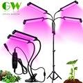 Новые завода светать светильник DC12V / USB 5V Phytolamp для растений Полный спектр затемнения лампа для выращивания для комнатных растений цветки са...
