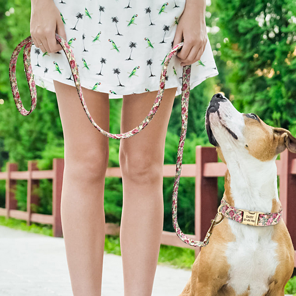 köpek tasması isimli