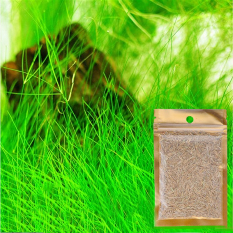 Aquarium Plant Seed Package Natural Aquatic Four-Leaf Grass Carpet Water Fish Tank Lucky Love