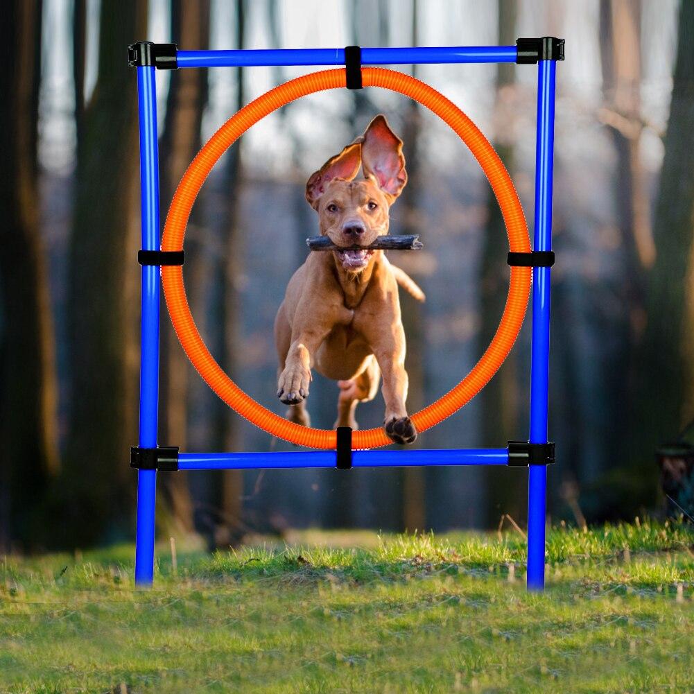 de treinamento ao ar livre cão pulando