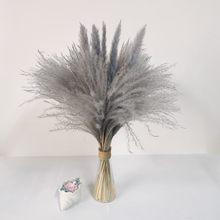 Natural seco pequeno pampas grama phragmites artificial plantas casamento grupo para decoração de casa flores reais dekoration