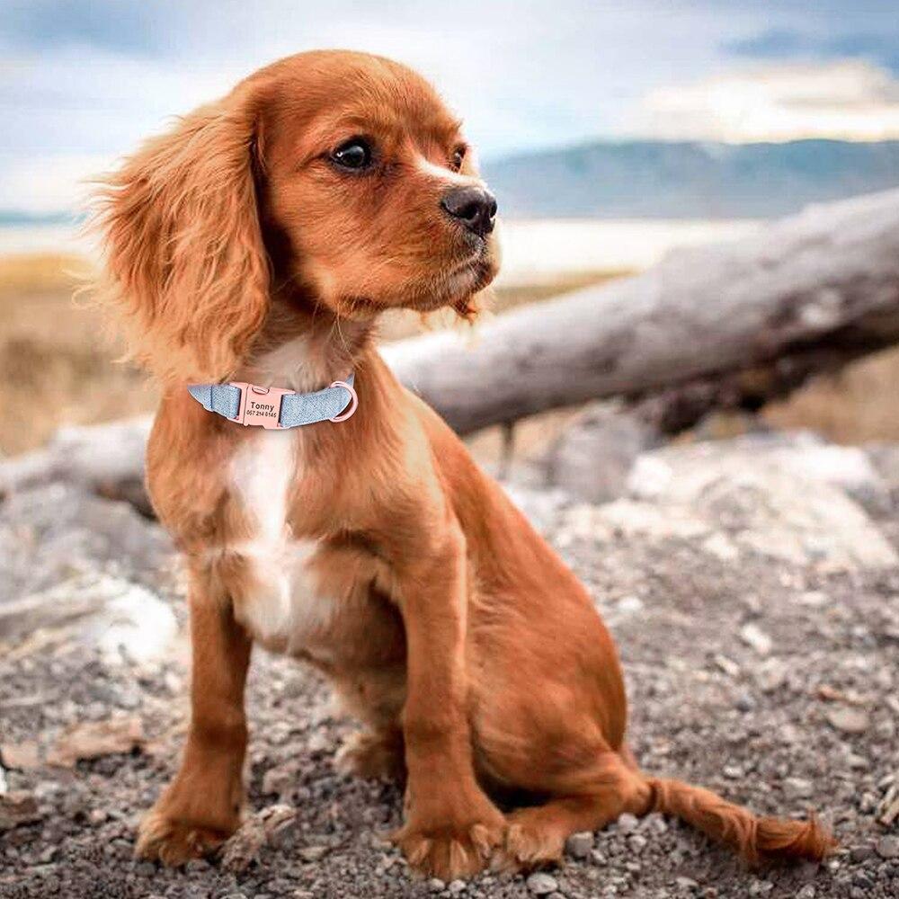 collier-personnalise-chien-unie4