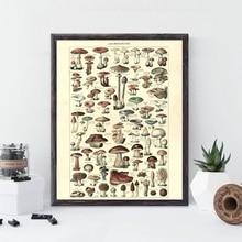Impresiones botánicas antiguas Vintage cartel de hongo versión francesa educativo pared arte lienzo pintura cuadro hogar Decoración de la pared