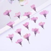Flores de cerezo prensadas de tacto Real Natural, marcapáginas de pétalos de sakura, tarjeta de regalo, decoración Facial y para uñas, 2-3cm/24 Uds.