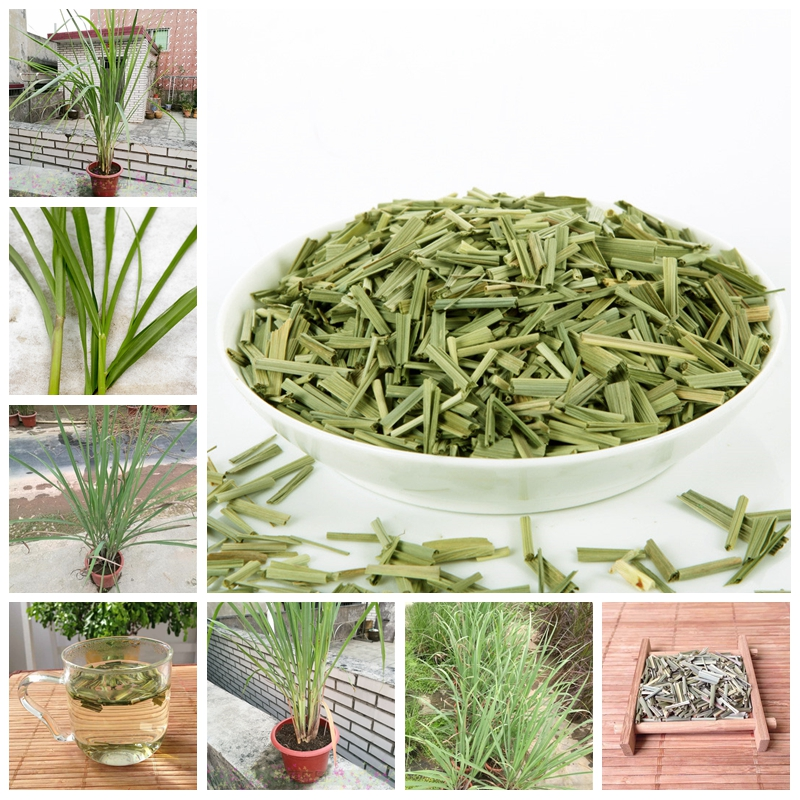 200 Pcs/ Bag Lemon Grass Bonsai Herb Edible Lemongrass Kitchen Vegetable Medicinal Use Graines Legumes Potager For Home Garden