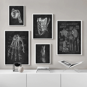 Human Anatomy Artwork Medical Clinic Wall Picture Skeleton Organ Muscle System Vintage Canvas Print Body Education Poster 3