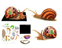 Free Shipping Anime Animal Anatomy Model 4D Puzzle Assembly Snail Anatomy Assembled Model Kids Science Toys Gifts 22*16*9.5cm