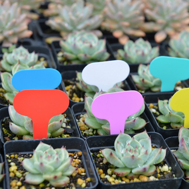 100pcs Plants Tags T-shaped For Gardening Plant Grounding Waterproof Tags Flower Vegetable Planting Label Tools Garden Tray Lids