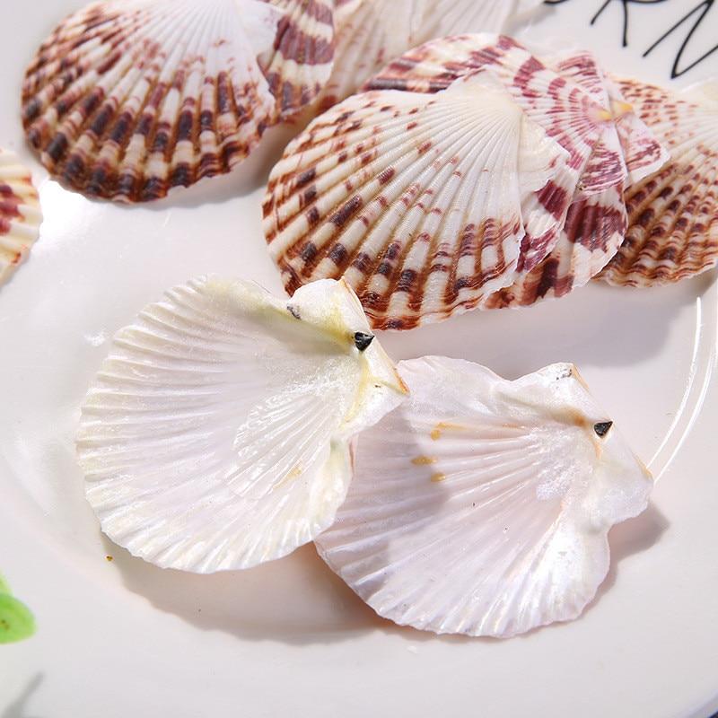 10 шт./лот, раковина с рисунком цветов и морских рыбок естественного цвета, ландшафтное украшение для аквариума, украшение для дома в средизе...