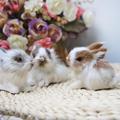 Миниатюрный реалистичный милый белый плюшевый кролик 15 см, реалистичное животное, модель пасхального кролика, подарок на день рождения, игр...