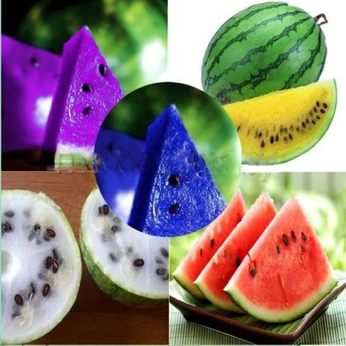Rare Watermelon  Delicious Fruit Vegetables  Garden Decoration  50pcs