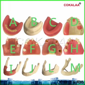 Good quality Dental materials dental model oral implant surgery maxillary sinus dental supplies equipment tools soft gums image
