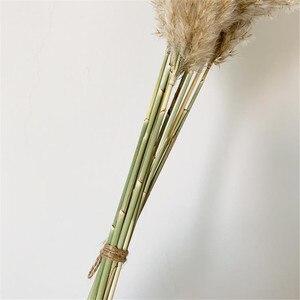 Image 5 - Tüy 30 40cm düğün pampas çim buket noel dekorasyon çiçek demet pampas çim doğal kurutulmuş reed bitkiler