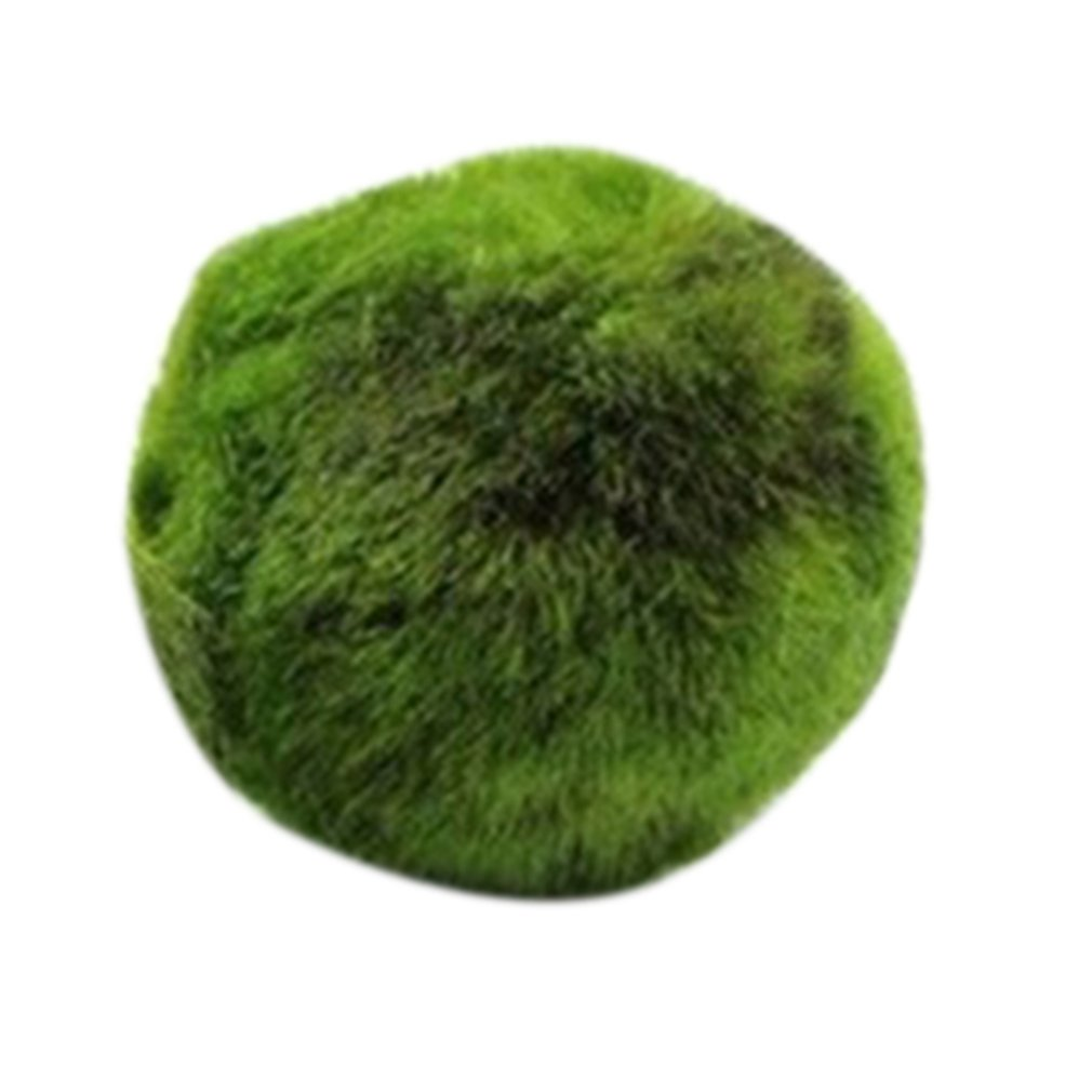Green Algae Ball Aquarium Landscaping Decoration Real Water Grass Seed Plants Live Seaweed Ball Lazy Algae Ball