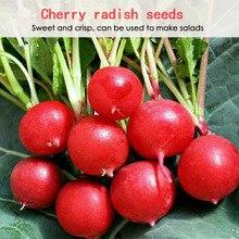 Вишня редис семена сердце отбеливание редис песок гнезда скороспелые балконные горшечные фрукты и овощи семена посев все сезоны