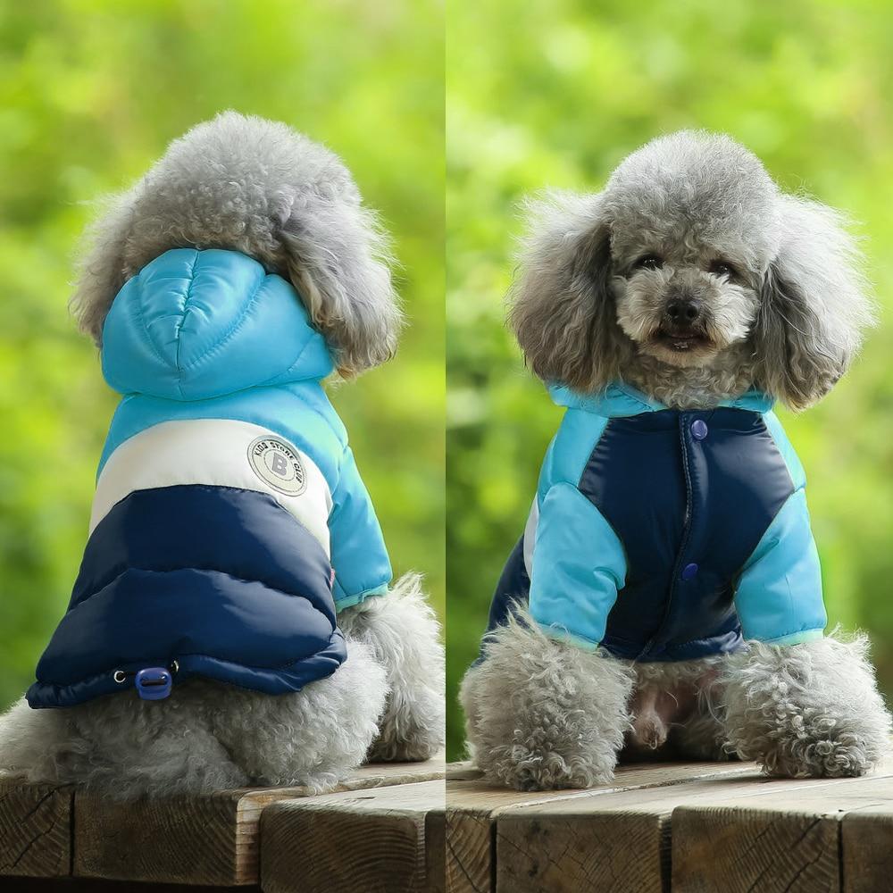 köpek için yağmurluk