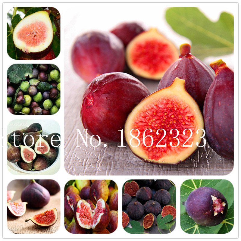 1Bag=100pcs Sale Fig Plants Balcony Potted Delicious Fruit Tree Fig Bonsai Ficus Carica Bonsai Home & Garden Plant Free Shipping