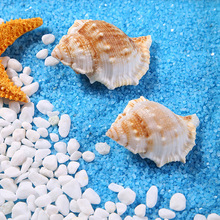 selling Marine natural shell short spines screw sea conch shells  Home Decor Crafts Aquarium Fish tank wedding decoration 500g