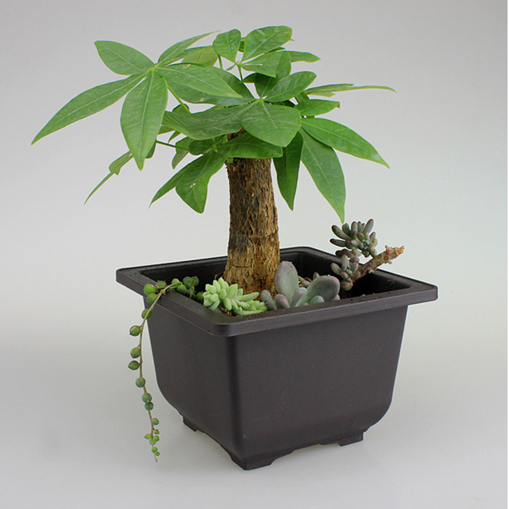 Plastic Flower Pot Square Balcony Nursery Bonsai Succulent Planter Bowl Decor