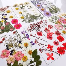 Multiple Beautiful Real Pressed Flower Dried Flowers for Art Craft Scrapbooking Resin Jewelry Craft Making Phone Case