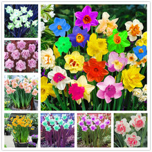 New Plant Flower Bath Salts Artificial daffodi Essence 100Pcs XZZ-61