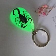 Leucht Echt Scorpion Schlüssel Kette-Neue Leucht Produkt Echten Krabben und Skorpion Schlüsselbund tasche Auto schlüssel Ring