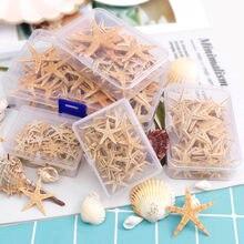 Adornos de estrellas de mar, conchas naturales para manualidades y decoración de bodas y hogar, artesanía de playa, DIY, 1-5 cm, 1 caja