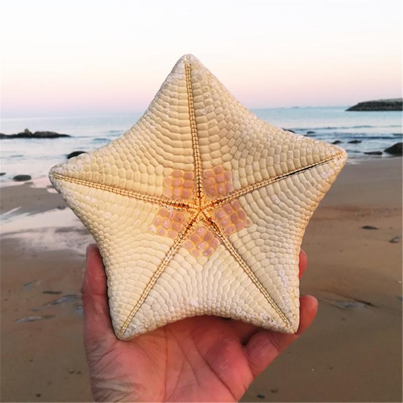 15-17cm Natural Conch Shells  Starfish Gifts Mediterranean Style Home  Wedding Gift Ornaments Dried Starfish Large Starfish