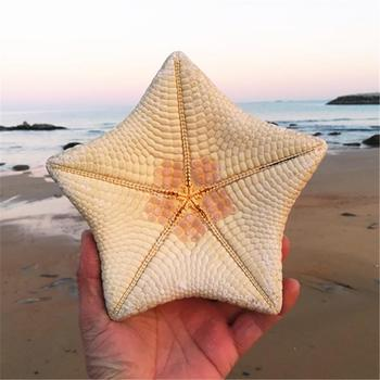 15-17cm natural conch shells starfish gifts Mediterranean style home wedding gift ornaments dried starfish large starfish фото