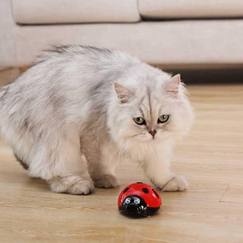 [MPK Store] 슈퍼 재미있는 고양이 장난감, AAA 배터리로 작동되는 애완 동물 장난감, 더 많은 것을 알기 위해 비디오를 볼 수 있다면 나를 잡아라.