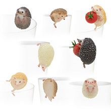 Japan original capsule toys cute pets 8 sets mini Hedgehog PUTITTO glass gashapon figures desktop Kids Toy(China)