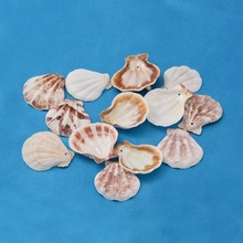 Dyed Sea Shell Beads  For DIY Jewelry Making Art, Goldenrod,39~45mm long,Approx 90pcs/500g карликовое дерево 1 90pcs diy